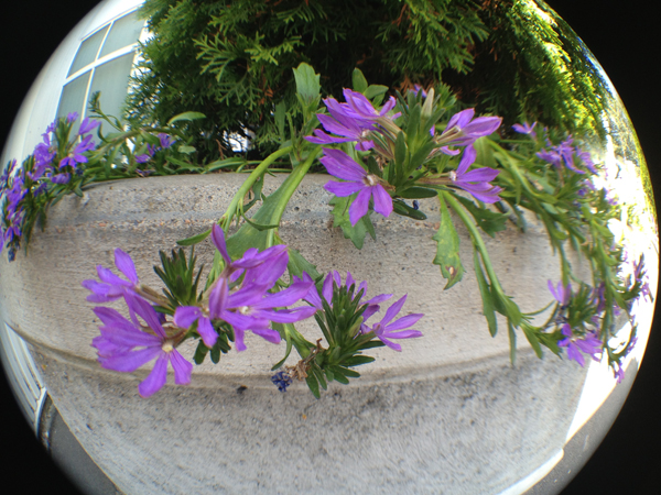 blommor_fisheye_iphone_1